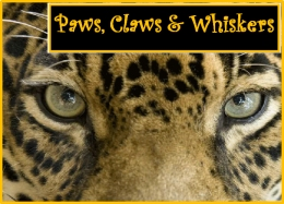 Image result for paws claws and whiskers